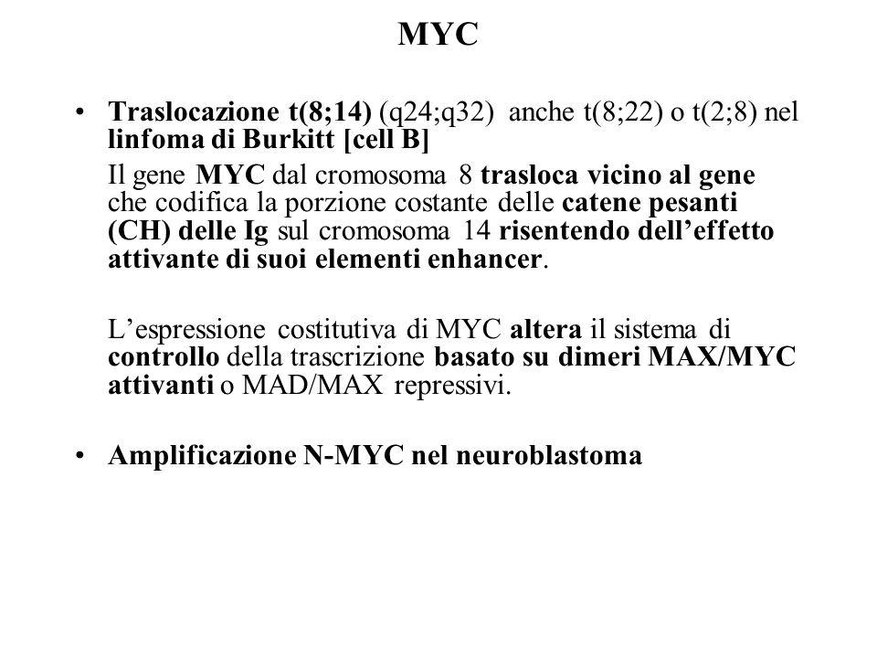 MYC Traslocazione t(8;14) (q24;q32) anche t(8;22) o t(2;8) nel linfoma di Burkitt [cell B]